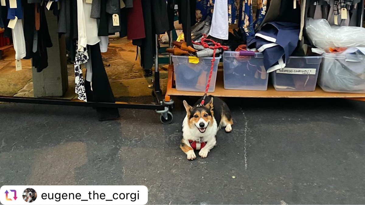Waiting on election results is stressful for everyone - so for some positivity in your feed, here is our one of our favorite and most handsome little costumers, Eugene the Corgi! 🐶 #gooddog