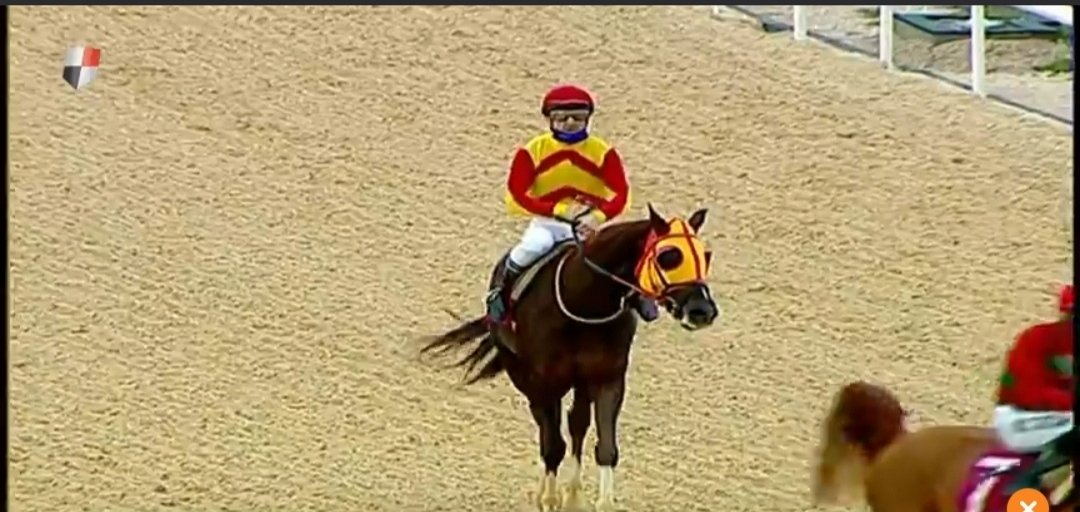 GümbürGümbür en çok yarış kazanan Arap atı