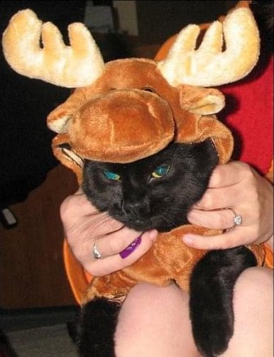 Here's a Moose as Moose for a #flashbackfriday circa 2007.  Gonna keep the kitties on the timeline for