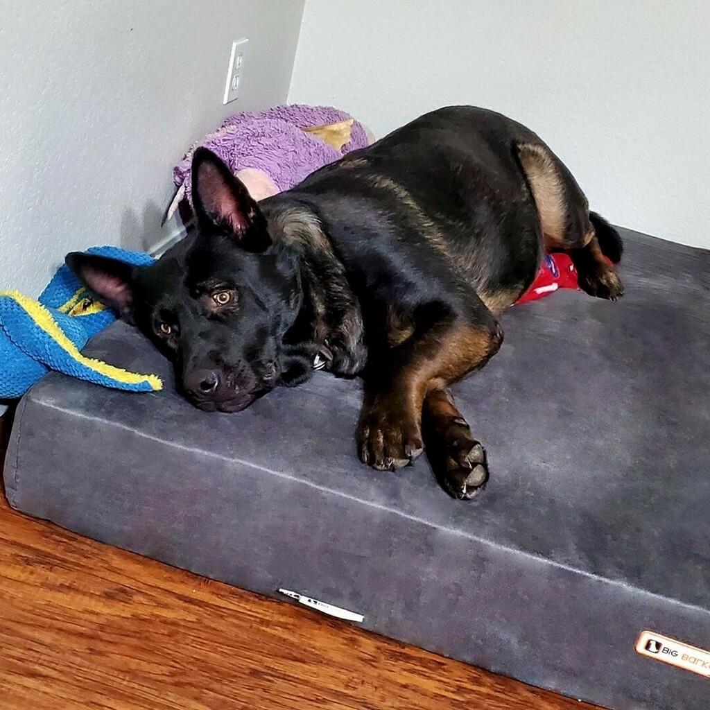 Picture of: Big Barker Dog Beds Bigbarkerusa Twitter