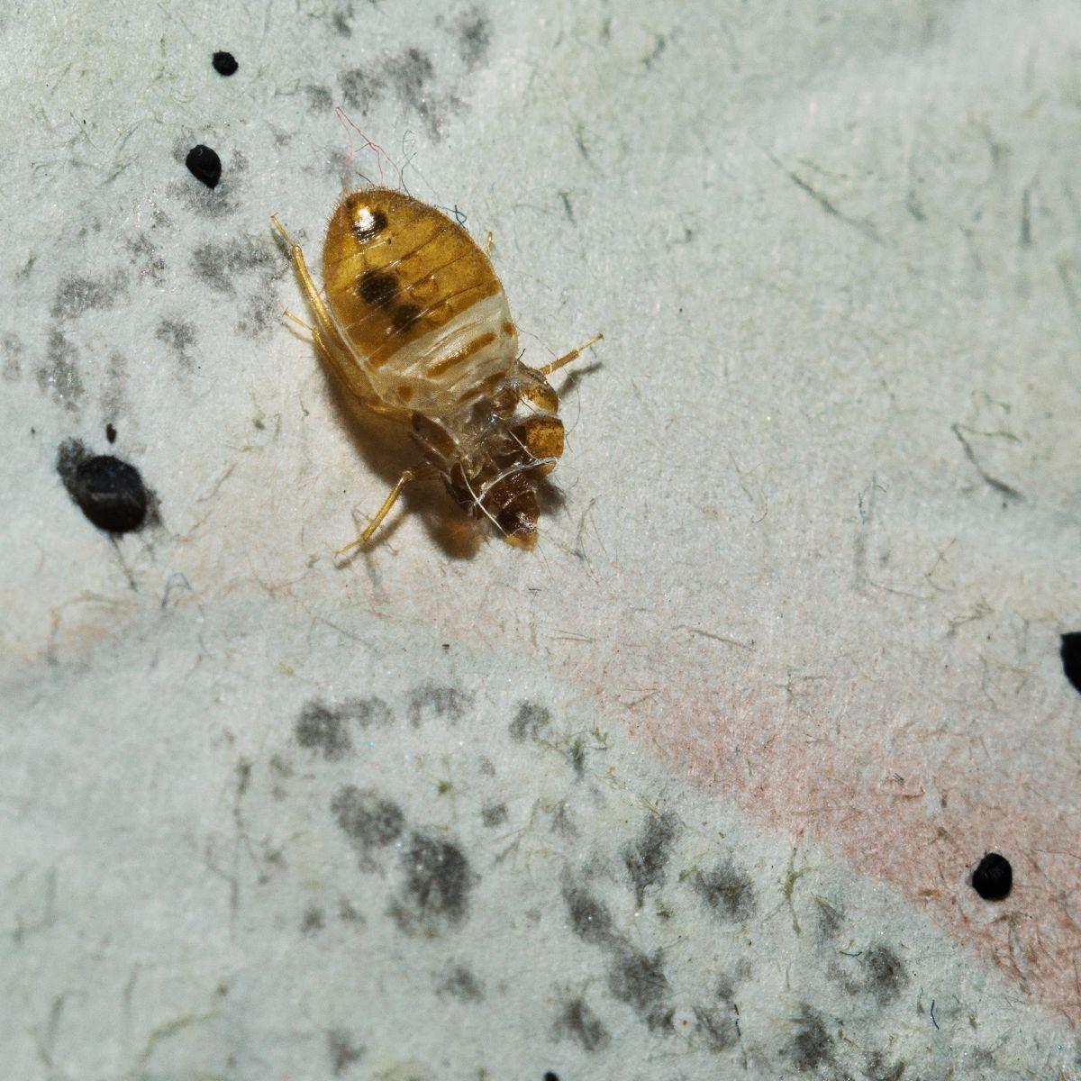 Bed Bug Barbeque Bedbugbbq Twitter