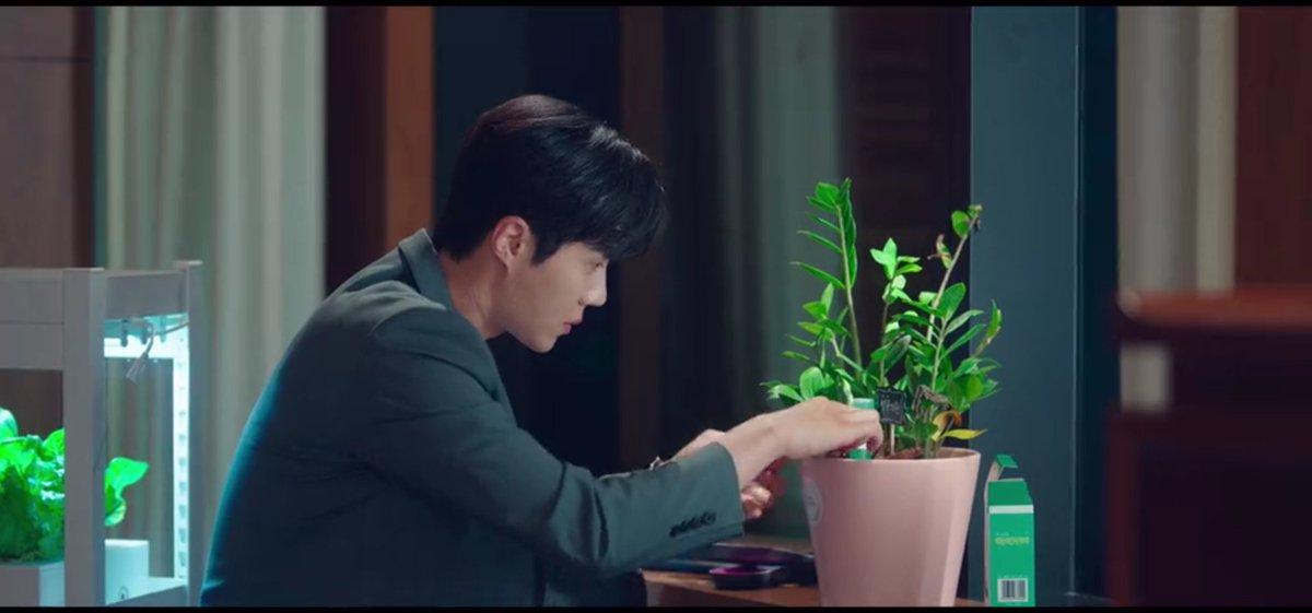 EmOum1vUcAAbmLz - Mengenal Pohon Giok, Tanaman Kesayangan Han Ji Pyeong di Drama 'Start-Up'