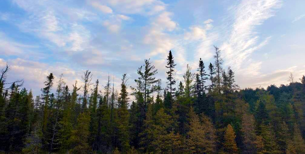 Are you exploring #AlgonquinPark this weekend?  We'd love to see photos of your adventures!! 🍂 🥾 🌲 ☀️ https://t.co/oVGoqTa4Dj