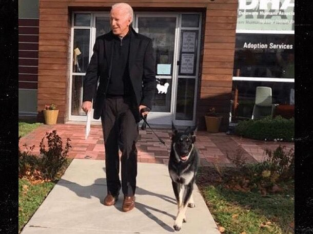 Joe Biden's german shepherd, 'Major', will be the first rescue dog in the White House!