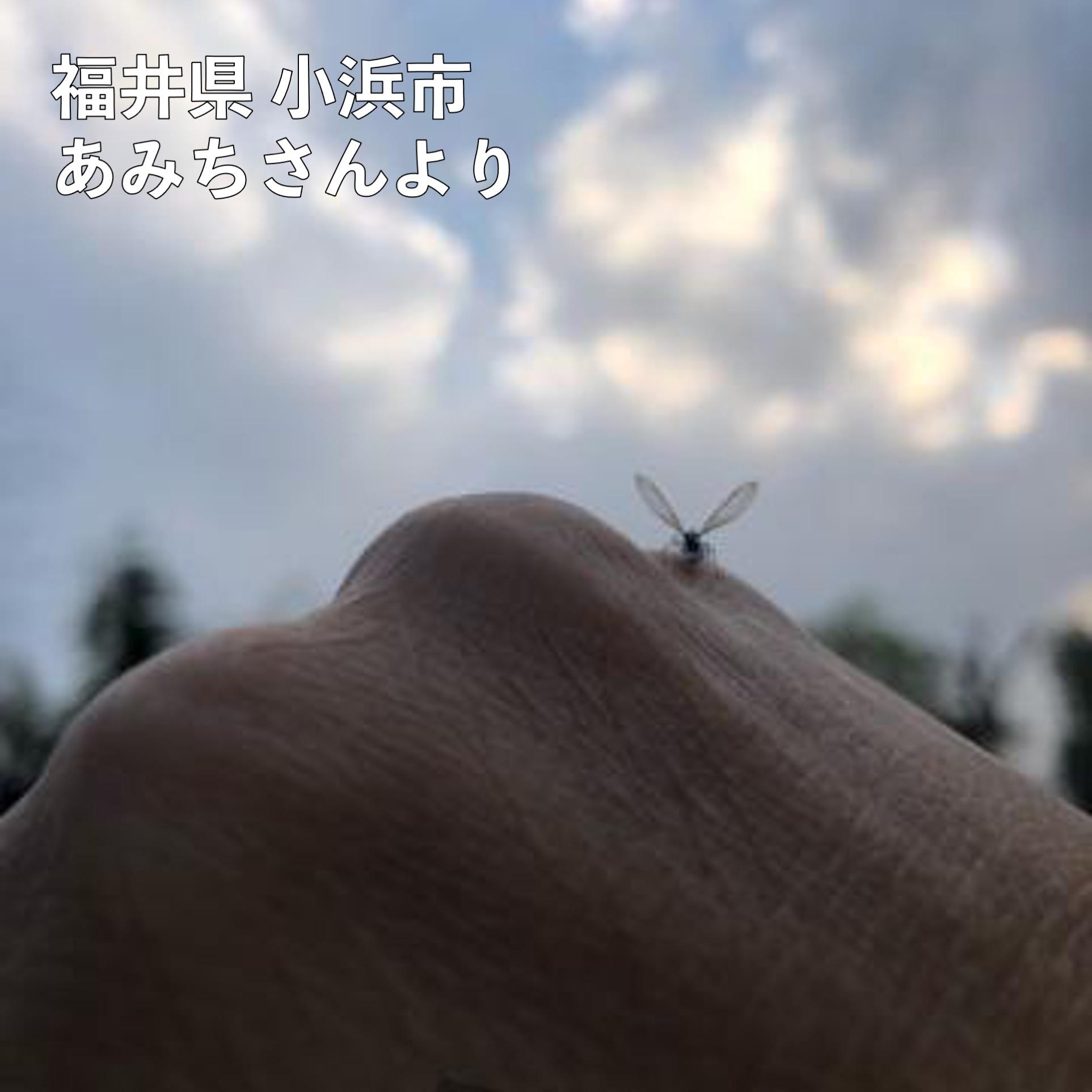 ニュース 福井 ウェザー