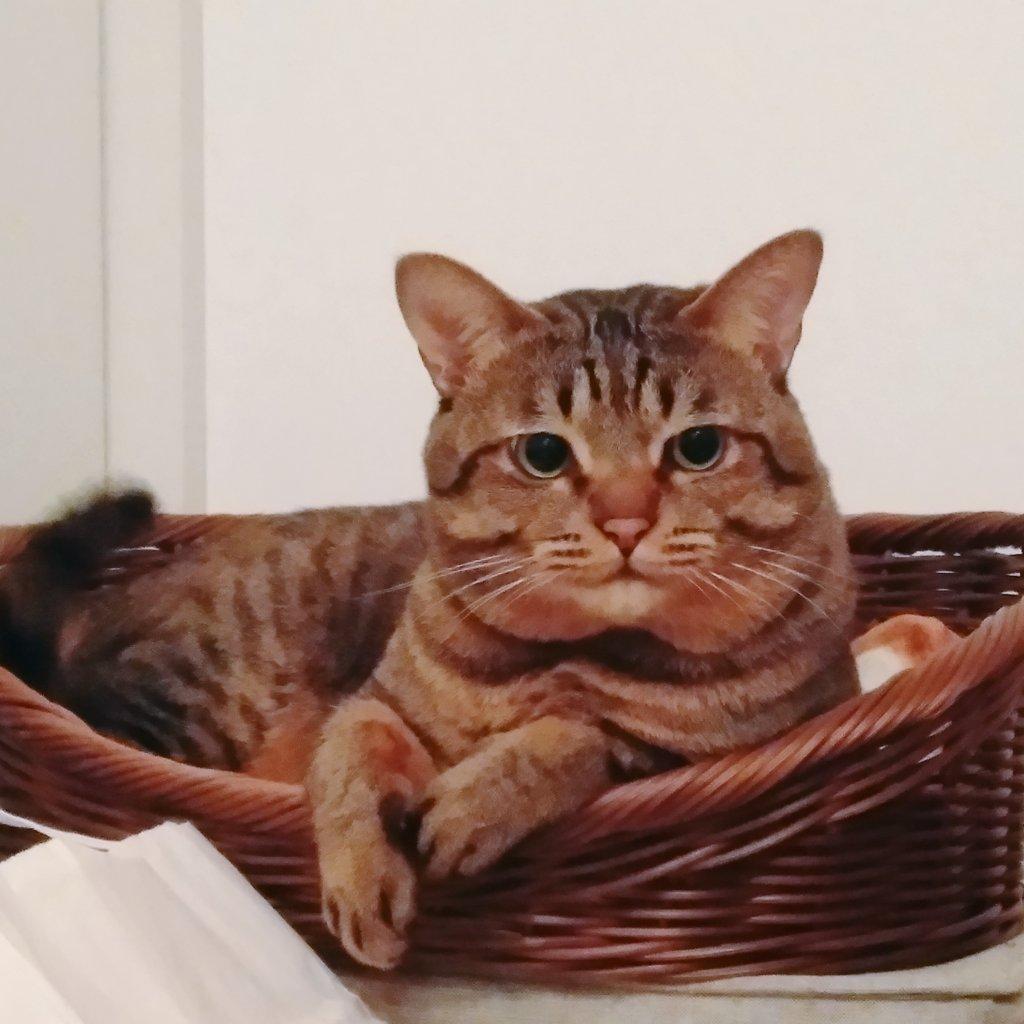 これは嫌いな掃除機で心を無にしてる猫がその後にちゅ~るをもらった時の比較写真