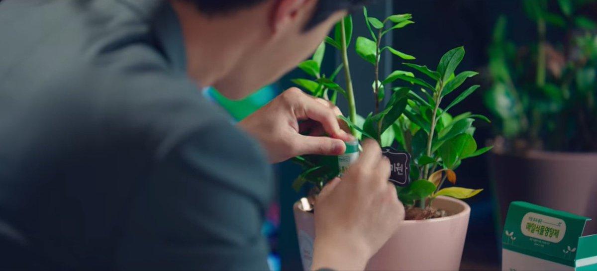 EmRpnU1VkAAOhsq - Mengenal Pohon Giok, Tanaman Kesayangan Han Ji Pyeong di Drama 'Start-Up'