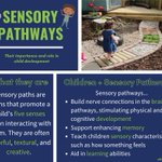Image for the Tweet beginning: Sensory pathways can play an