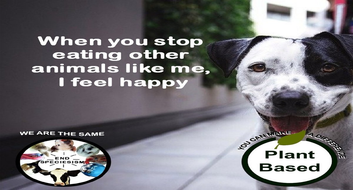 #enddiscrimination #endspeciesism #plantbased   #endsuffering #dogthoughts #happydog #happypups #dogphotos #dogoftheweek #equality #puppypic #dogpic #dogpictures #dogmemes #dogs #dog #doggos #cutedoggos #puppy #cutedogs #pups #puppytime #joyfulliving #happiness  #bekindtoallkinds