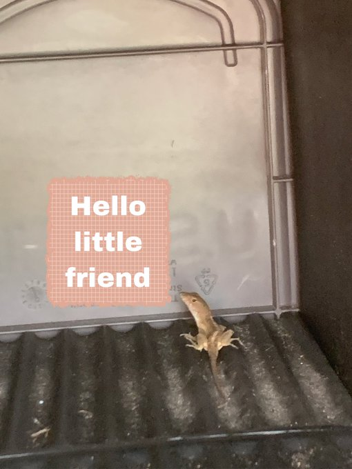 So my mailbox is the home of this little guy, what shall we name him ? https://t.co/AzirGO2iLU