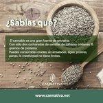 Image for the Tweet beginning: ¿Sabías Qué? #PreguntasVoladas 🤔 es