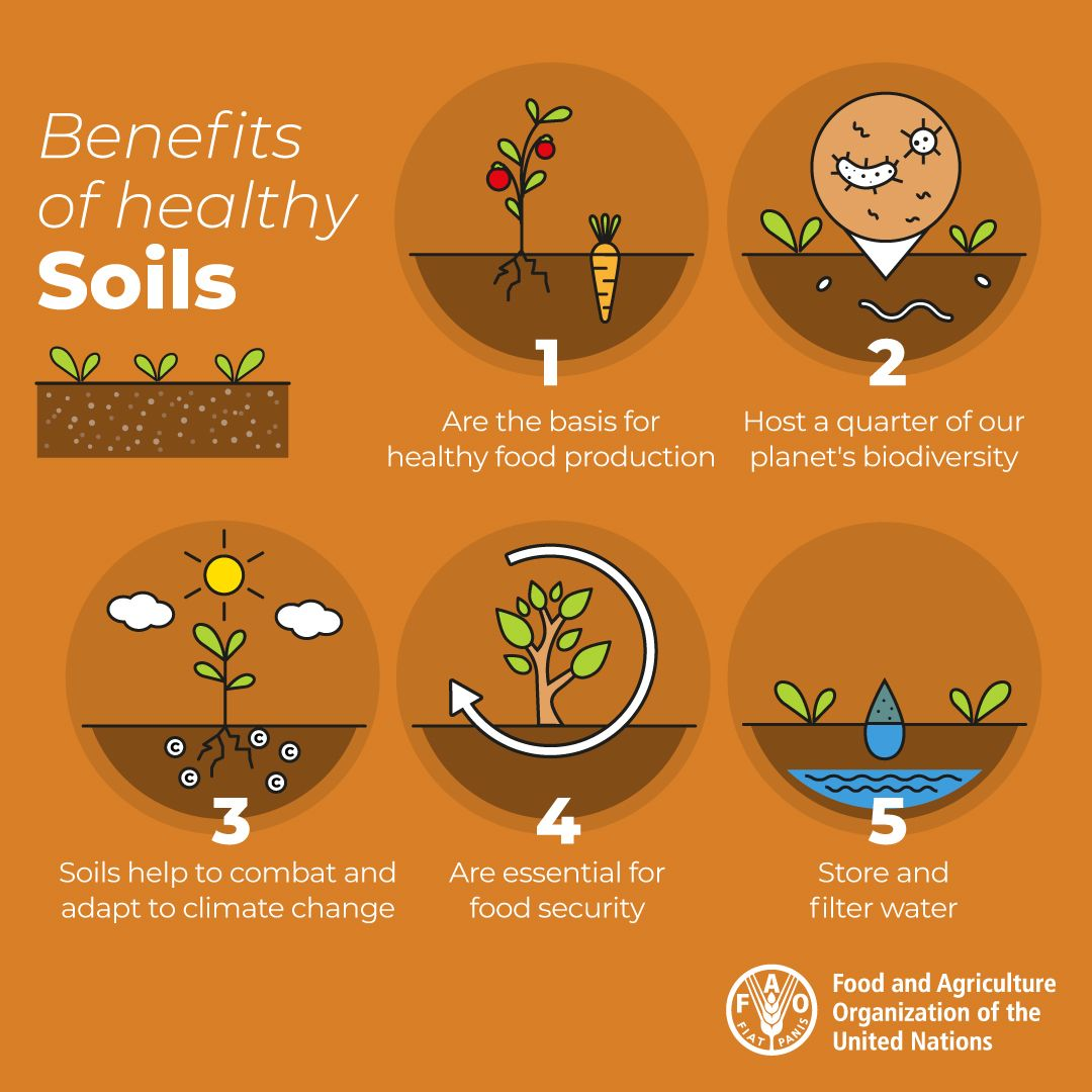 Soil biodiversity is this year's theme for #WorldSoilDay!   Did you know soil is a living resource, home to more than 25% of our planet's #biodiversity?  #SoilBiodiversity