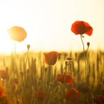 Image for the Tweet beginning: Lest we forget.  Remembering and