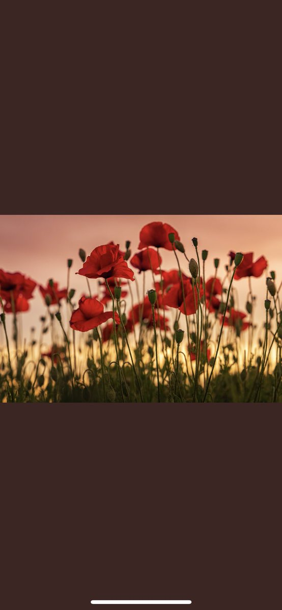 test Twitter Media - So grateful to all who volunteered, sacrificed, served, fought, and died, for our freedom. We will never forget. We will remember you. #LestWeForget https://t.co/cROrYJ3MIX