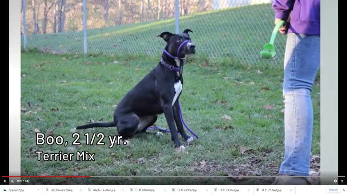 Boo is a star on and off the screen! Hoping this will help her get out of the shelter and into a loving home.