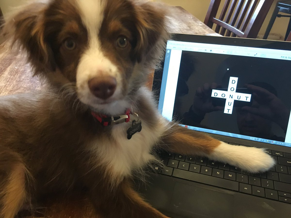 @evanbirnholz I've taken it a step further and got my dog, Donut, into the constructing game.  He's trying, but I'm afraid it's @not_a_crossword. https://t.co/L5io67YBre
