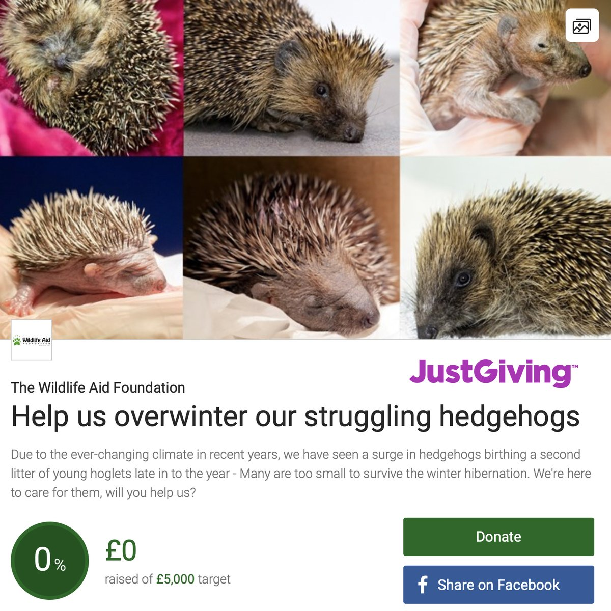 We have seen a surge in hedgehogs birthing a second litter of young hoglets late in to the year - Many are too small to survive winter hibernation.The struggling hoglets are brought in to us at WAF. But we need your help to feed them all! To donate visit:
