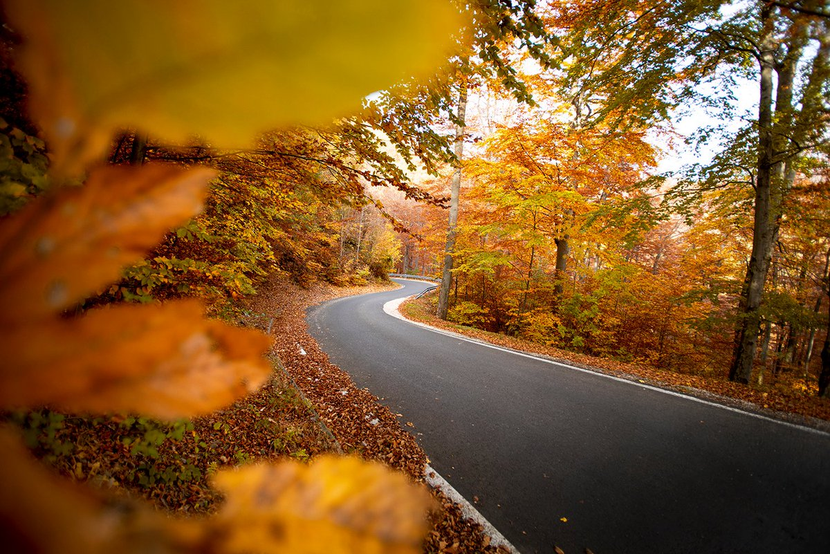 @ablueaeshna Autumn vibes #zagreb #croatia #croatiafulloflife #autumn #fall #nature #road #natgeo #natgeotravel #thursdaymorning #ThursdayMotivation #thursdayvibes .