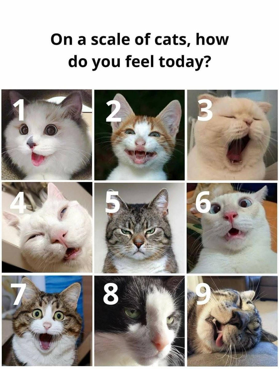 How you all feeling today, on a scale of cats??? I am ayt a #5