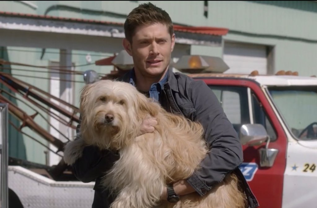 "property of mickey on Twitter: ""i'm still not over the fact that dean saved  a dog, named him miracle and chuck really turned him into dust 😡😭  #supernatural #spn… https://t.co/Q47Ug49uMK"""