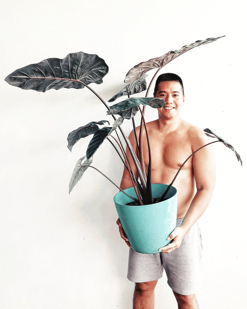 Gardening always put  a smile on my face 💚 it's a nice hobby and quite therapeutic 🌱🌿🍃    #AngelotheExplorer #plantitosofmanila #plantito #plantita