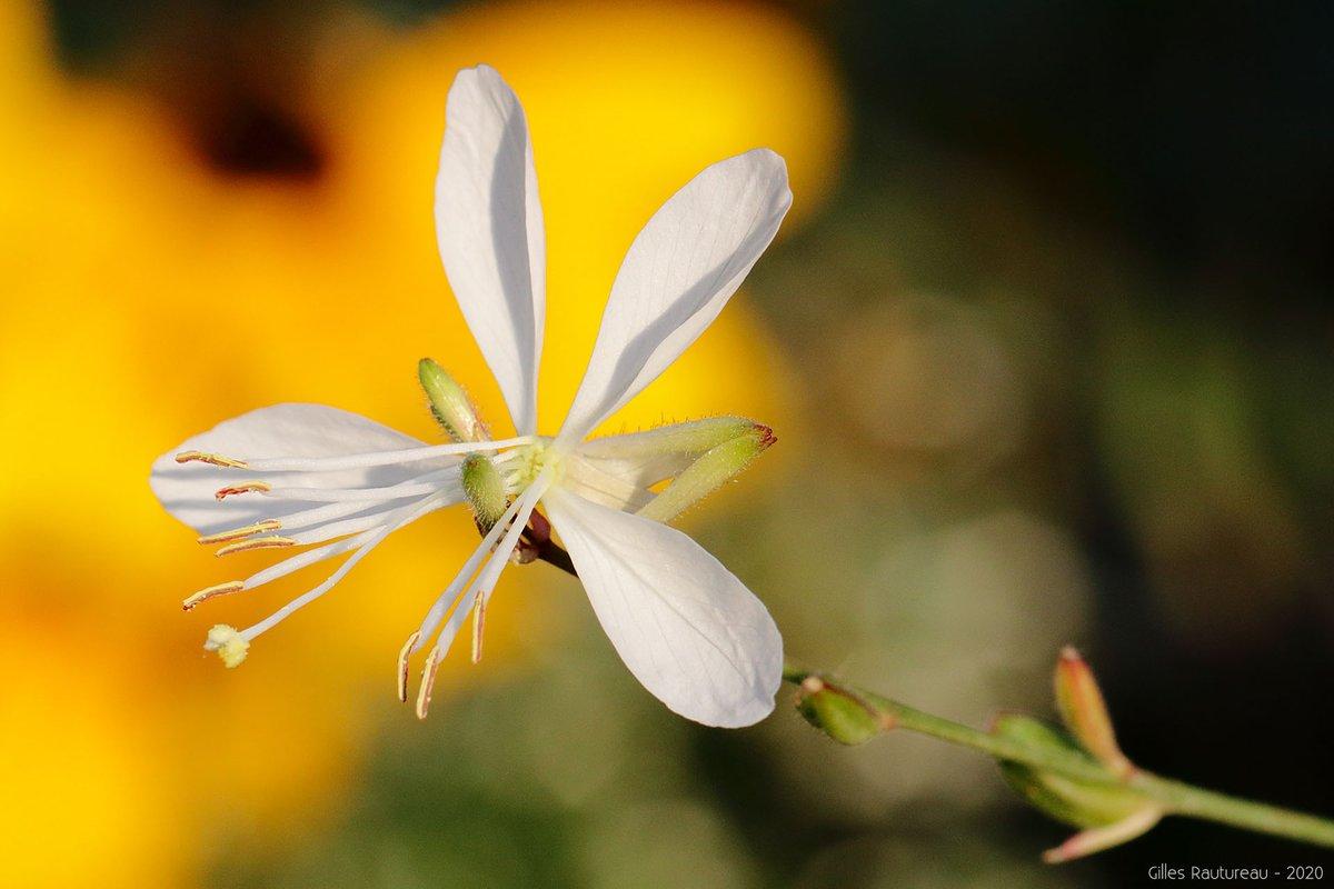 RT @firehands974: #Nature #NaturePhotography #Photography #Flower #Fleur https://t.co/mT9fkcr4ys