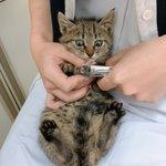 初めての爪切りで目を真ん丸にした猫w相当びっくりしているw