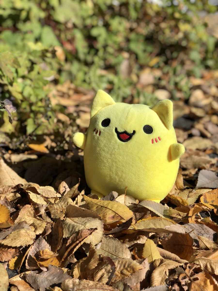求人ジャーナル本社前も秋の風物詩の落ち葉のじゅうたんが広がってるよ!みんなで毎朝のお掃除大変なんだけど、この落ち葉で焼きいもできないかなあ…とか毎回考えちゃうんだあ🍠焼き芋食べたくなってきちゃったなあ!!#ジャーにゃん #落ち葉 #食欲の秋