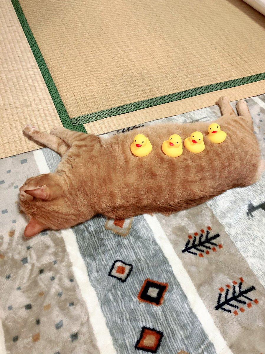 ホットカーペット敷くとなんでも許してくれる猫
