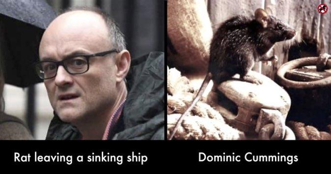 #Rat and #DominicCummnings