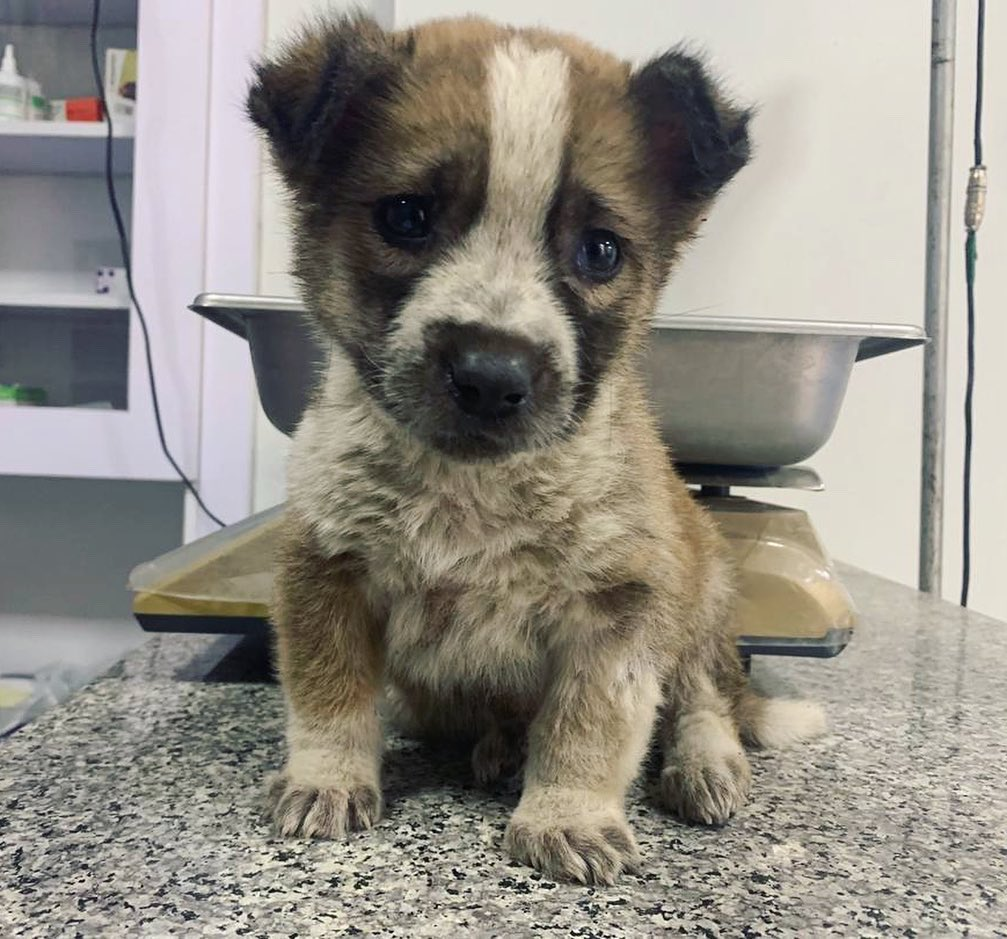 We have a new #nameandcare for you all 😍 This little pup was found alone on the streets with a bad skin condition. We've started treatment BUT-he now needs a name! If you'd like to suggest a name for him please donate what you can & leave a comment below!