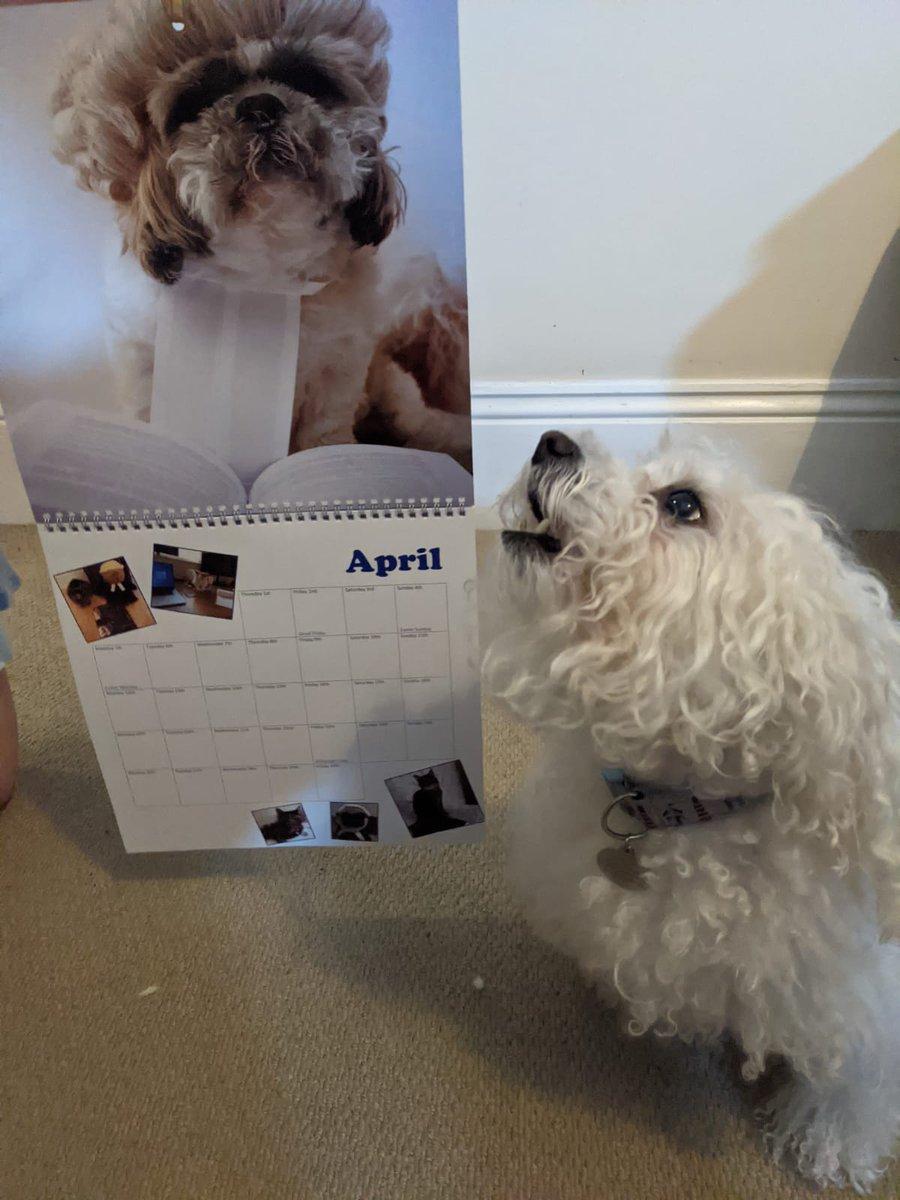 Legal Pets Charity Calendar Billable Hour Lawpawcalendar Twitter