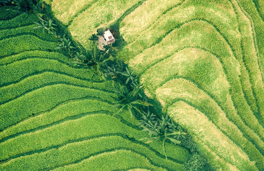 #Landinvestments must safeguard tenure rights, human rights, #foodsecurity, and the environment 🌿 🦍  Learn more on this @FAO course 💡  Thanks to @DFID_UK 🇬🇧   #ResponsibleInvestment #ZeroHunger