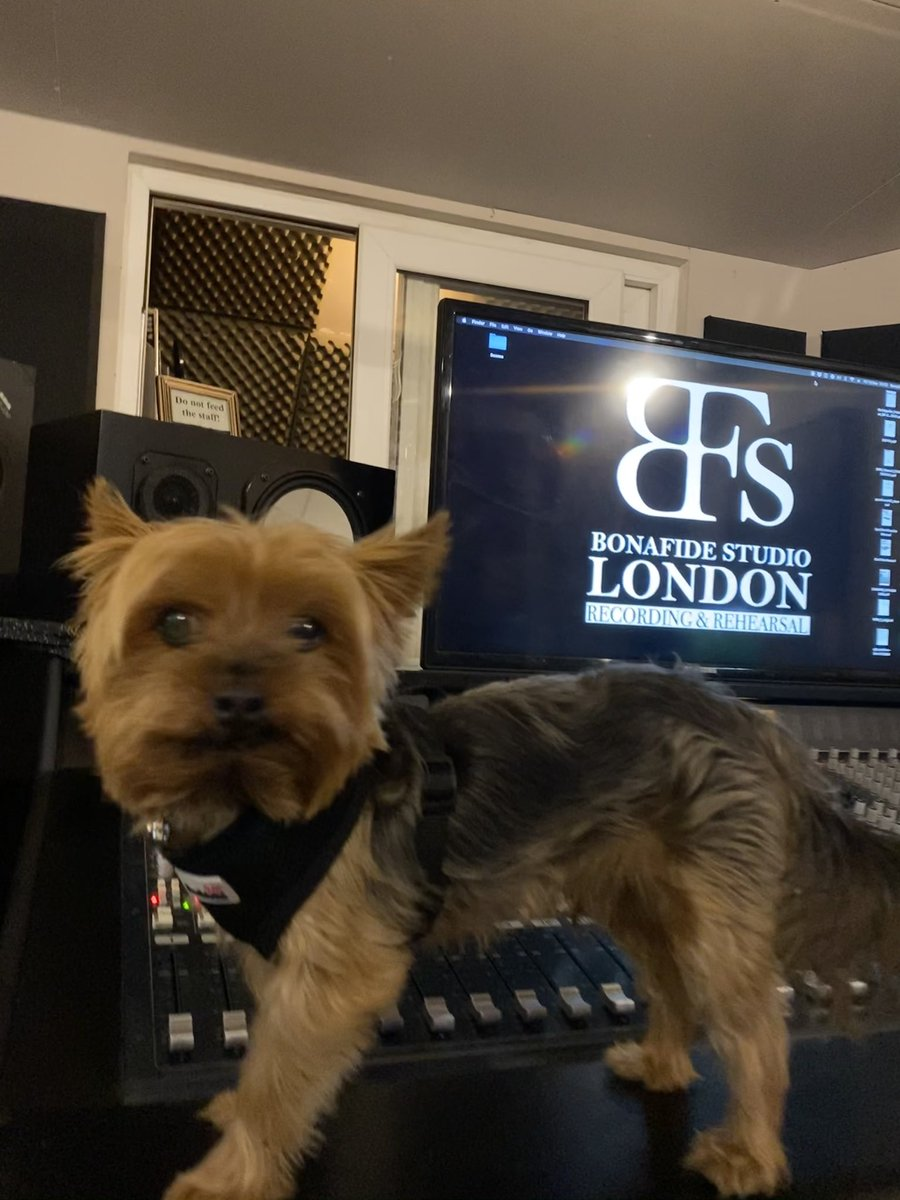 Good Sunday from our #ControlRoom and happy, positive vibes from our big boss #yorkie Marshall! He is renowned #musiccritic, occasionally on backing #vocals and self proclaimed our Head of Security 😁 02088839641 #studioflow #studiolife #yorkieterrier https://t.co/BmuuN29UVN