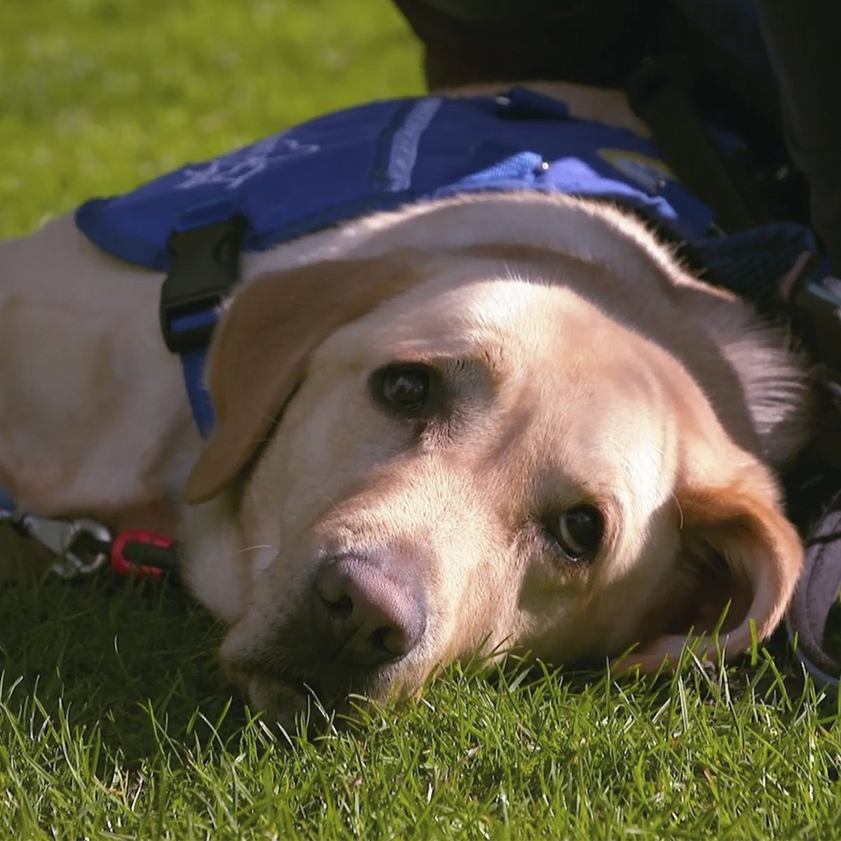 If you like gorgeous dogs, you'll love the @BBCCountryfile Children in Need special 🐶 Catch up on @BBCiPlayer now!