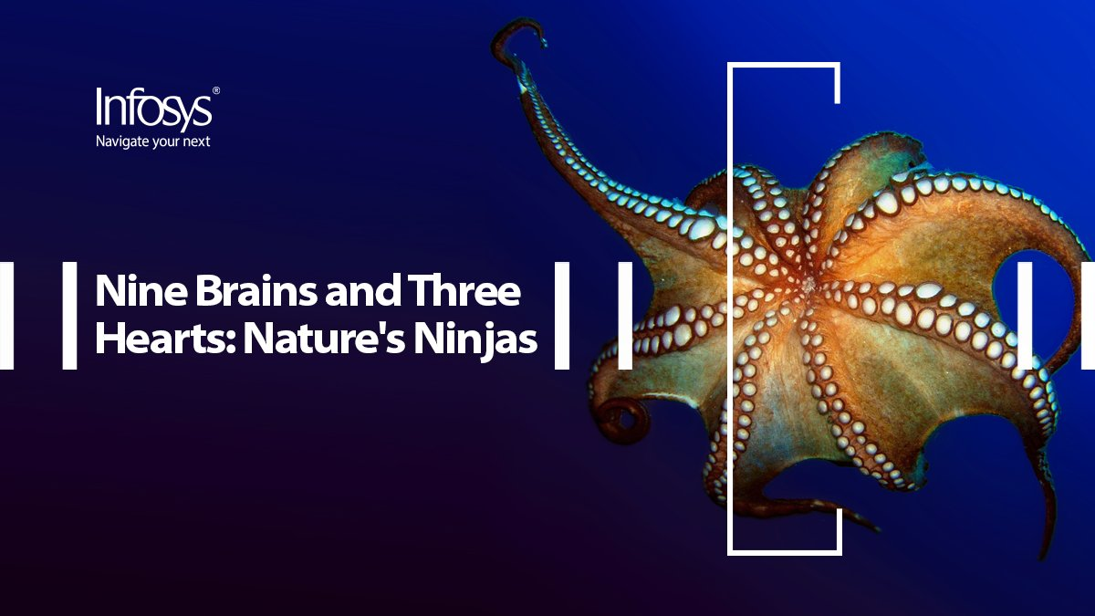 Nature's ninja has three hearts, nine brains, and eight arms – and much to teach us. Enterprises must learn from nature – evolve and adapt. https://t.co/JcsLTBRDCj @Infosys_IKI  #InfosysKnowledgeInstitute @jeffkav https://t.co/39mLaWgQiW