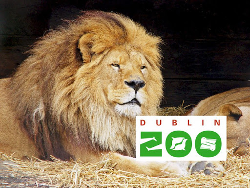 #Goodstory - Sans ressource financière, le 4ième plus ancien zoo au monde (1831), situé à Dublin, a failli mettre la clé sous la porte.   C'était sans compter la générosité des Irlandais qui ont répondu présents et envoyé 2,3 millions d'euros pour parrainer l'un des 400 animaux👏 https://t.co/kKW5xYYvOF https://t.co/zpcZAHU3xg