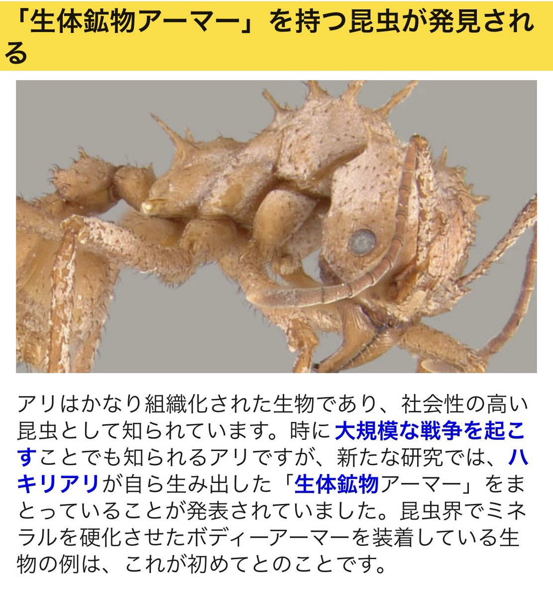 生体鉱物アーマーとかめちゃくちゃカッコ良すぎるパワーワードのアリ