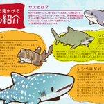 11月27日はサメの日?水族館で見かけるサメの一部を紹介!