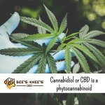#Cannabidiol is one of a group of active compounds known as phytocannabinoids. While many of these compounds show potential benefits, #CBD is one of the largest components of this group. #hempoilextract #cbdoil #cannabidiols #cbdhelps https://t.co/FmCdt67AXW