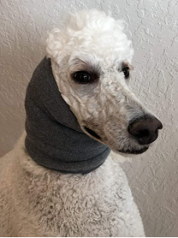 just found out you can get special scarves for dogs that calm them in stressful situations but nowhere does it mention that it also makes them look like melancholic eastern European widows and I feel like that should be a bigger selling point