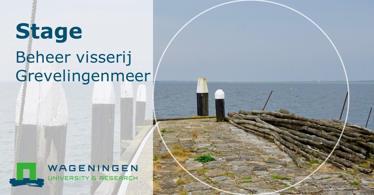 Wie wordt mijn nieuwe stagiair? #visserij #Grevelingen #Zeeland