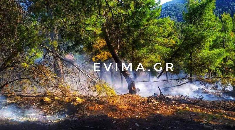 Φωτιά σε πευκοδάσος στην Εύβοια! (φωτό) - irafina.gr/fotia-se-pefko…