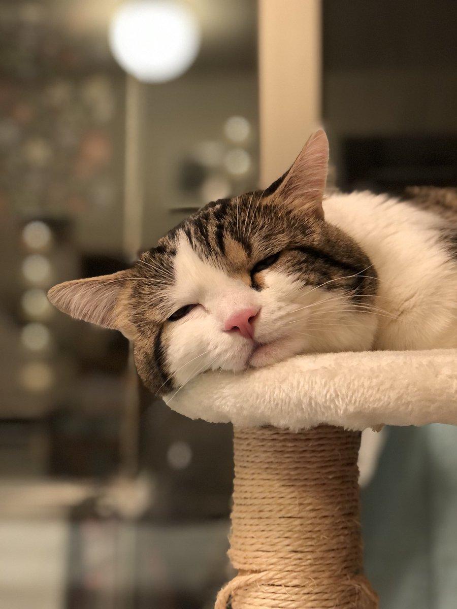 ガチで寝てます。っていう感じの表情。  #口元かわいい https://t.co/bExPdIOjVh