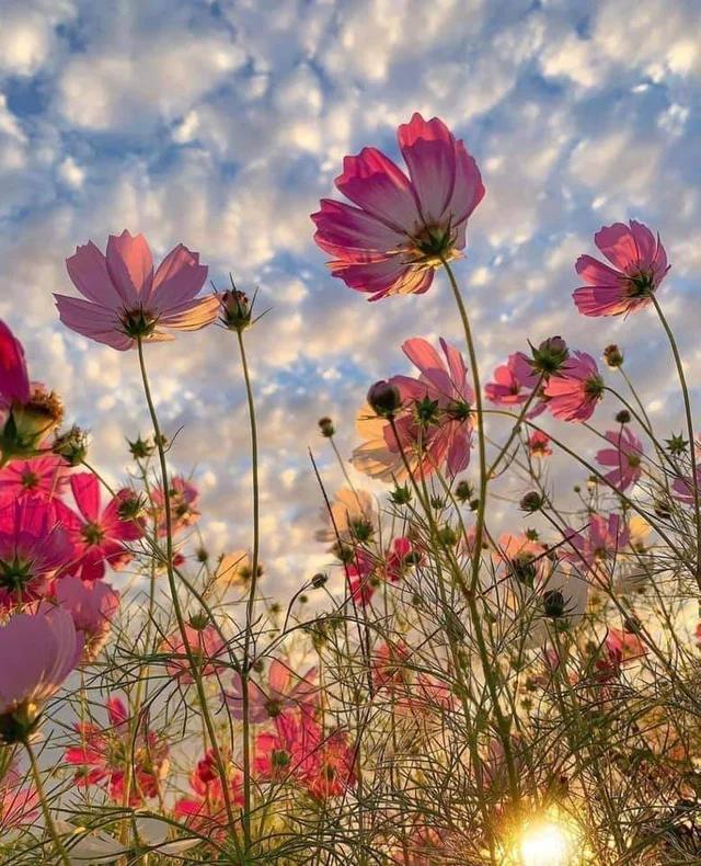Flowery promise. #nature #naturelovers #naturephotography #natureperfection #photooftheday #photograpy #beautiful #world #naturelovers #NatureDaily #WorldNature #NaturePic https://t.co/8I4tkD7OIG