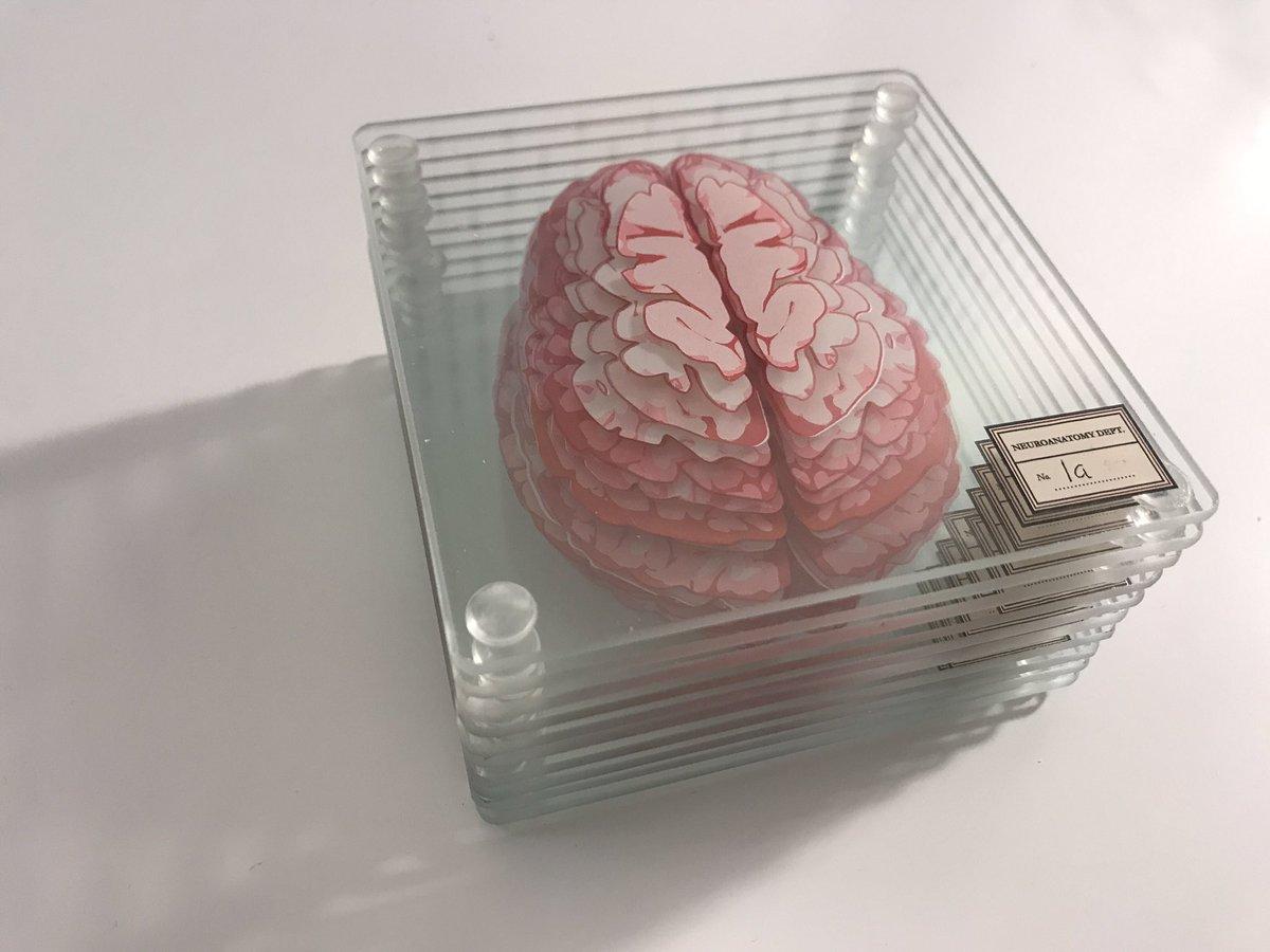 昨日、全米がサンクスギビングデーを祝っている最中、僕の個人的な誕生日でもあったのですが、メチャクチャ嬉しいプレゼントを貰いました。『脳のコースター』最高にイカしてるぜ…!