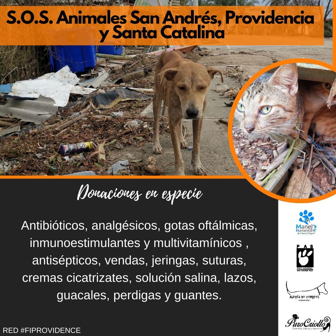 ¡Los animales de San Andrés y Providencia, damnificados por el #HuracánIota, aún nos necesitan! Aquí 👇 insumos urgentes, puntos de acopio en Bogotá y Medellín y canales para donaciones en dinero. Han donado comida para perros; falta para gatos, gallinas, cerdos, caballos y vacas
