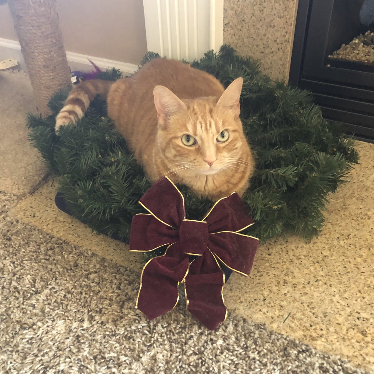 I barely got it out of the box before she was trying to get in it. #Clara #Wreath #ChristmasCat #Weirdo https://t.co/ZfOZSiVeQf