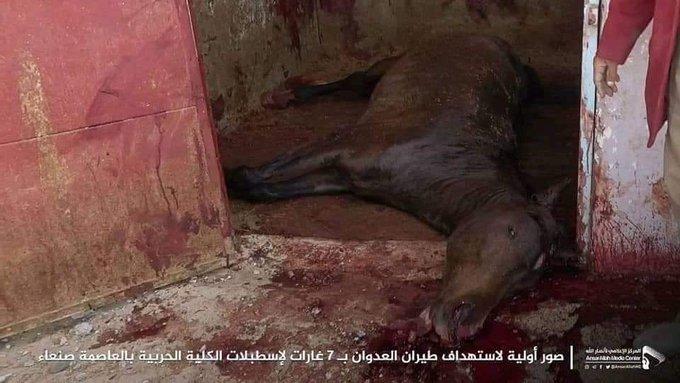 غارات هسترية   على اسطبلات  خيول اليمن العربية الاصيلة   تحالف حاقد امريكي صهيو سعودي