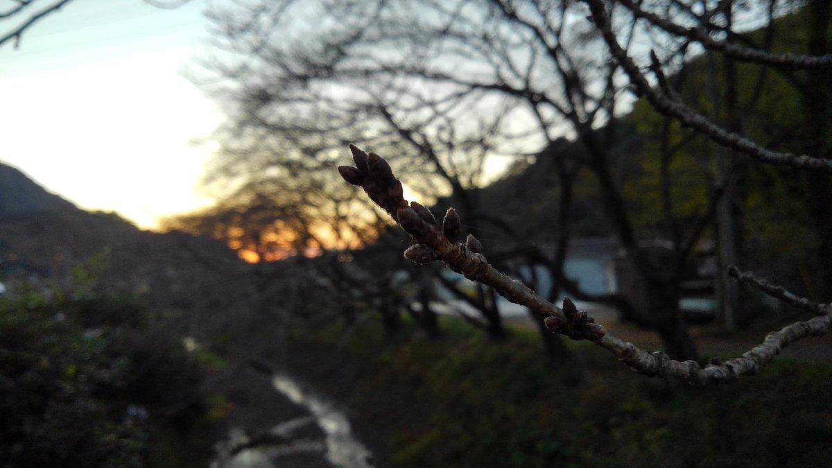 令和2年 やっぱり尺里滝沢川の桜 28th  November 2020   #尺里滝沢川 #桜 #さくら山北 #高松山 #cherryblossom #yamakita #japaneselandscape